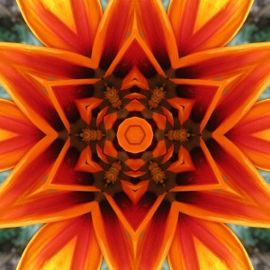 orange flower mandala1